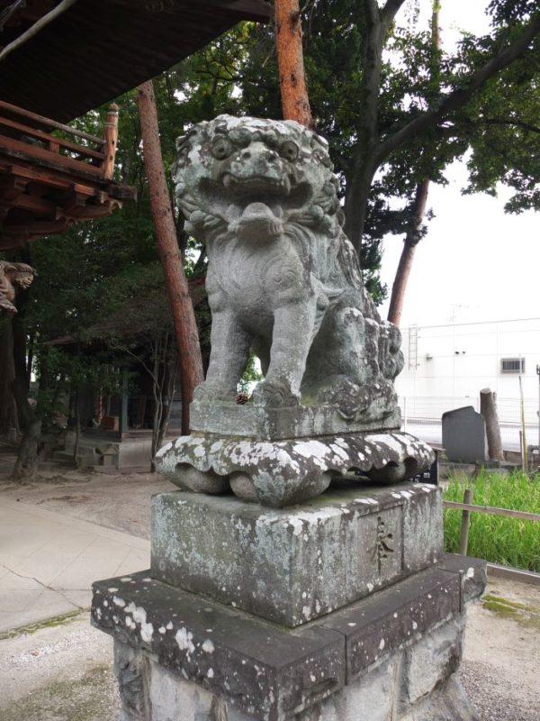甲府市・住吉神社のギョロ目狛犬