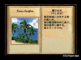 椰子の木(やしのき)デザーテッドアイランド