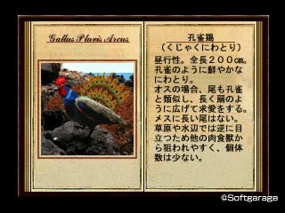 孔雀鶏(くじゃくにわとり)デザーテッドアイランド