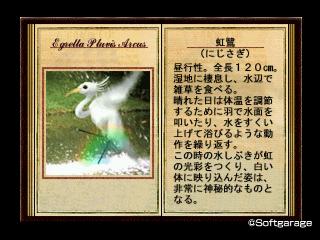 虹鷺(にじさぎ)デザーテッドアイランド