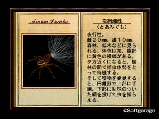 投網蜘蛛(とあみぐも)デザーテッドアイランド