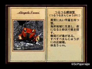 つるつる饅頭蟹(つるつるまんじゅうがに)デザーテッドアイランド