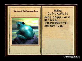 風鈴蛙(ふうりんがえる)デザーテッドアイランド