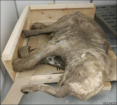 凍土から現れる太古の動物