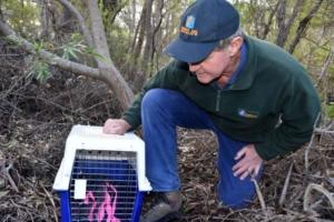 ギルバートネズミカンガルーを保護する研究者のトニー・フレンド博士