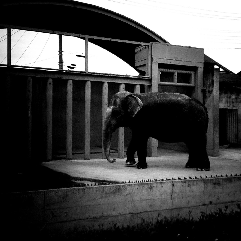 ドーナツカメラで撮る遊亀公園