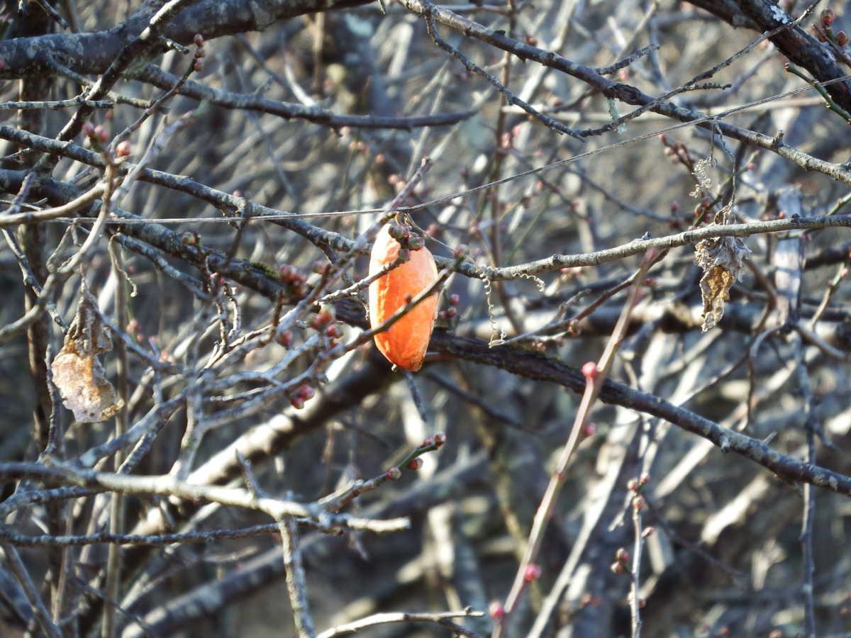 野鳥の会甲府支部(山梨県) 定例武田の杜探鳥会 2020年2月