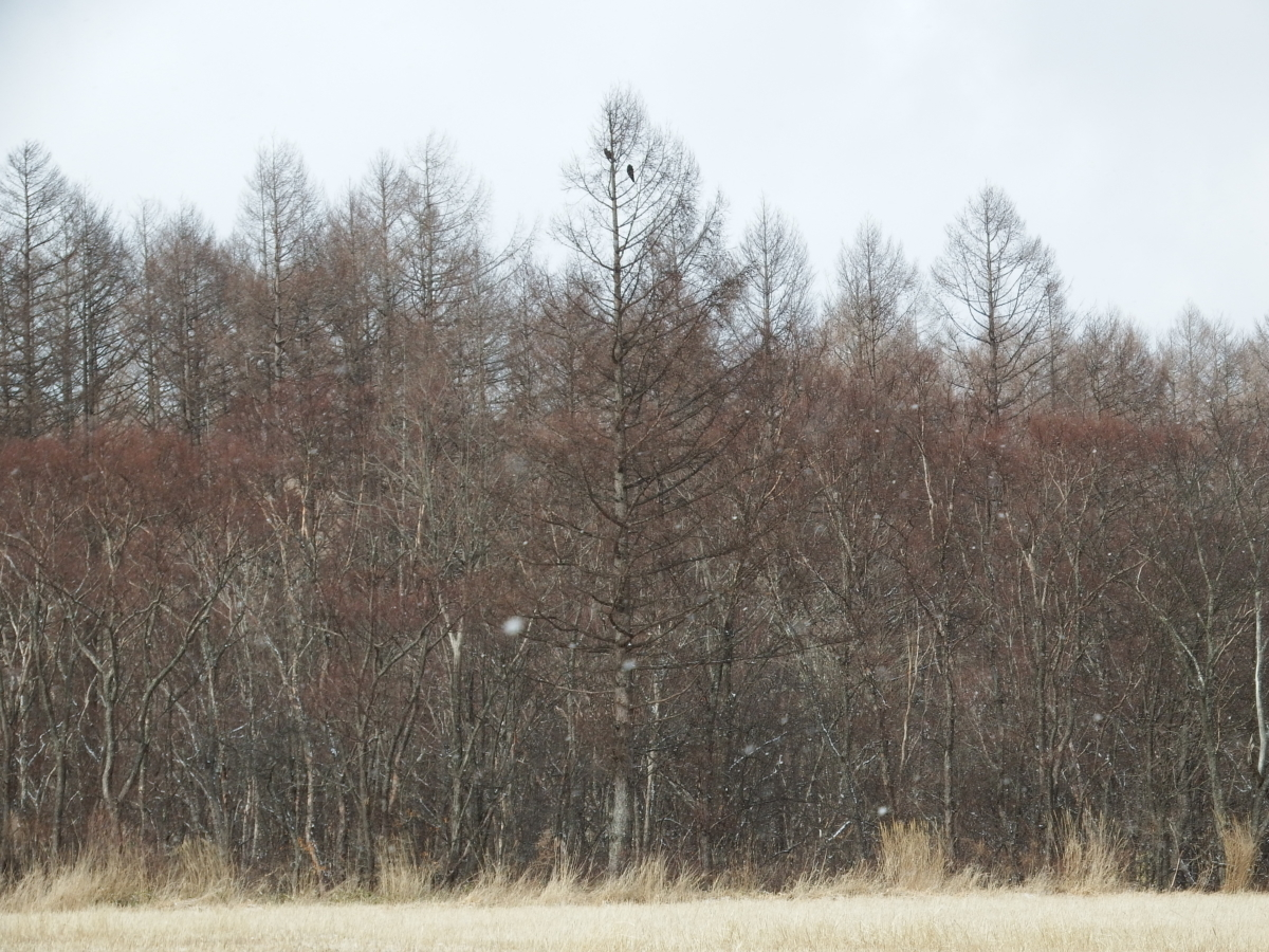 野辺山・清里の野鳥をFUJIFILM FinePix S1で撮る