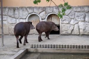 富士フイルムXF55-200mmで遊亀公園附属動物園を撮影