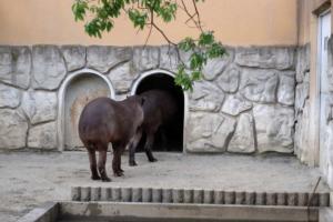 富士フイルムXF55-200mmで動物園を撮影(作例)