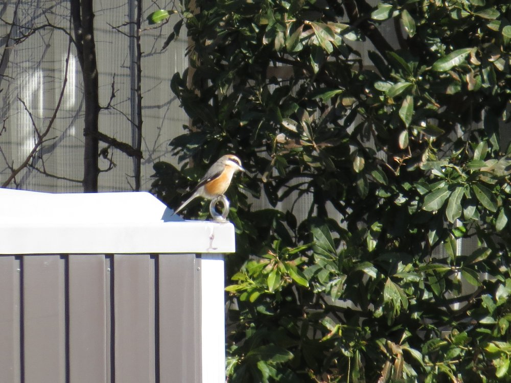 武田の森で野鳥撮影