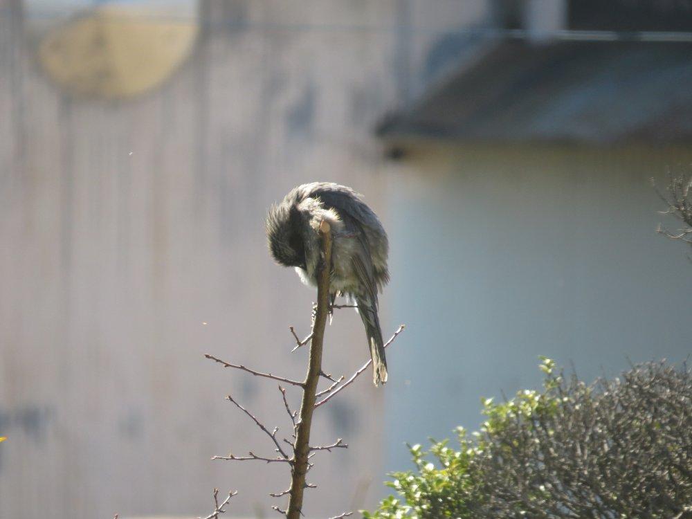 最近撮った鳥