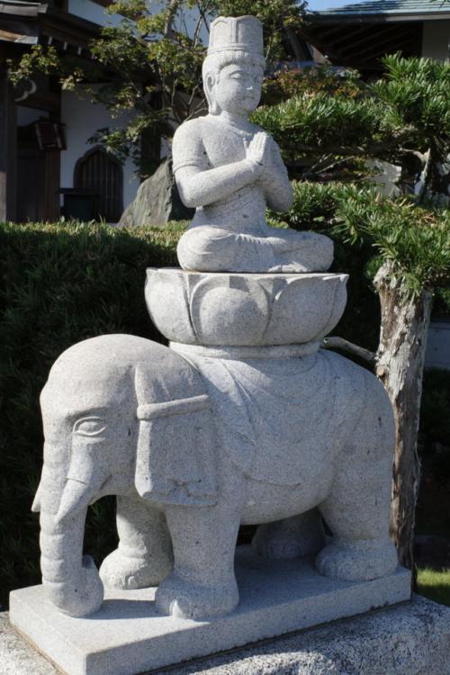 静岡 龍華寺の巨大ソテツ(静岡ソテツ紀行・前編)