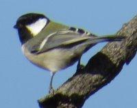 釜無川の野鳥