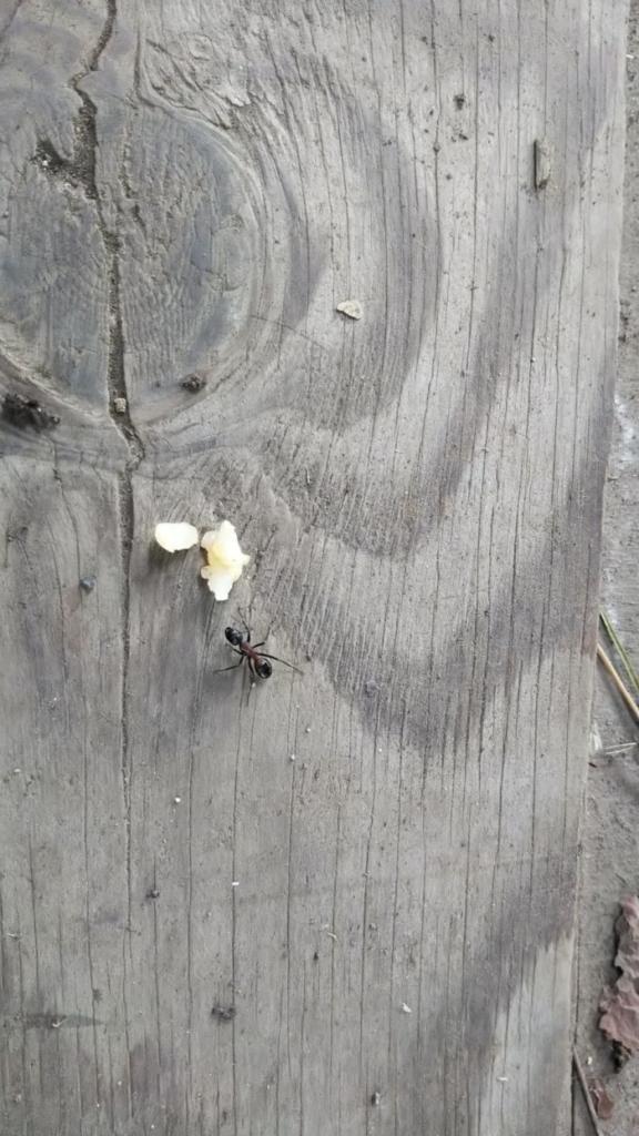 富士吉田の虫