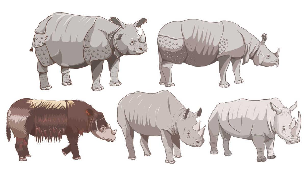 サイ5種類の生息数