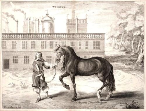 イベリア馬