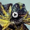 初代ウルトラマン第10話「謎の恐竜基地」(ジラース)