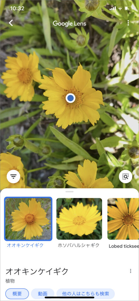 スマホのカメラで植物の名前が調べられる無料アプリ「Googleレンズ」