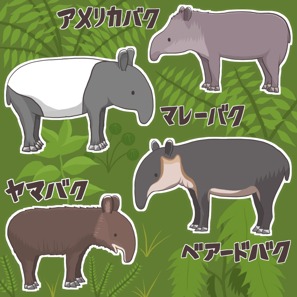 世界バクの日(World Tapir Day)のために描いたイラスト